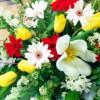 GWイベント直前情報⑤「母の日」に新潟産の花を贈ろう5/3~6