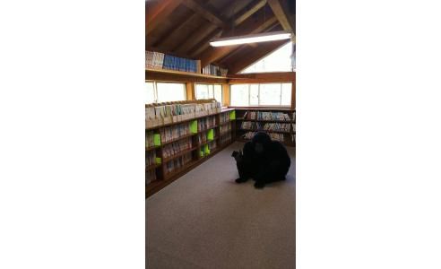 本も自然も楽しめるこども基地訪問しました!