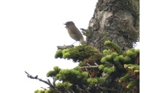 Vol.60 高山③高山で生きる鳥たち