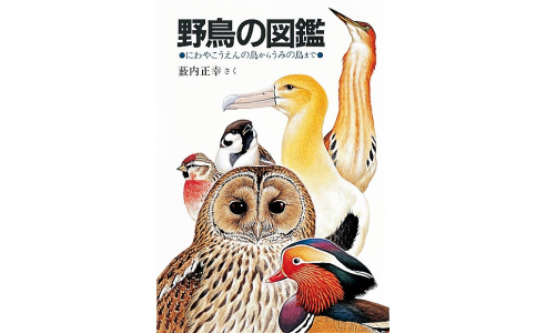 野鳥の図鑑 にわやこうえんの鳥からうみの鳥まで