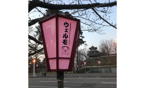 東京と新潟  最近想うこと