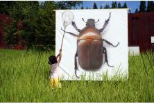 虫は好きですか?苦手ですか?